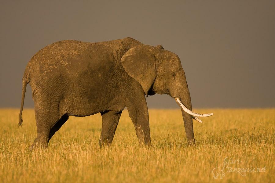 Safari (Including Serengeti) & Zanzibar Extension