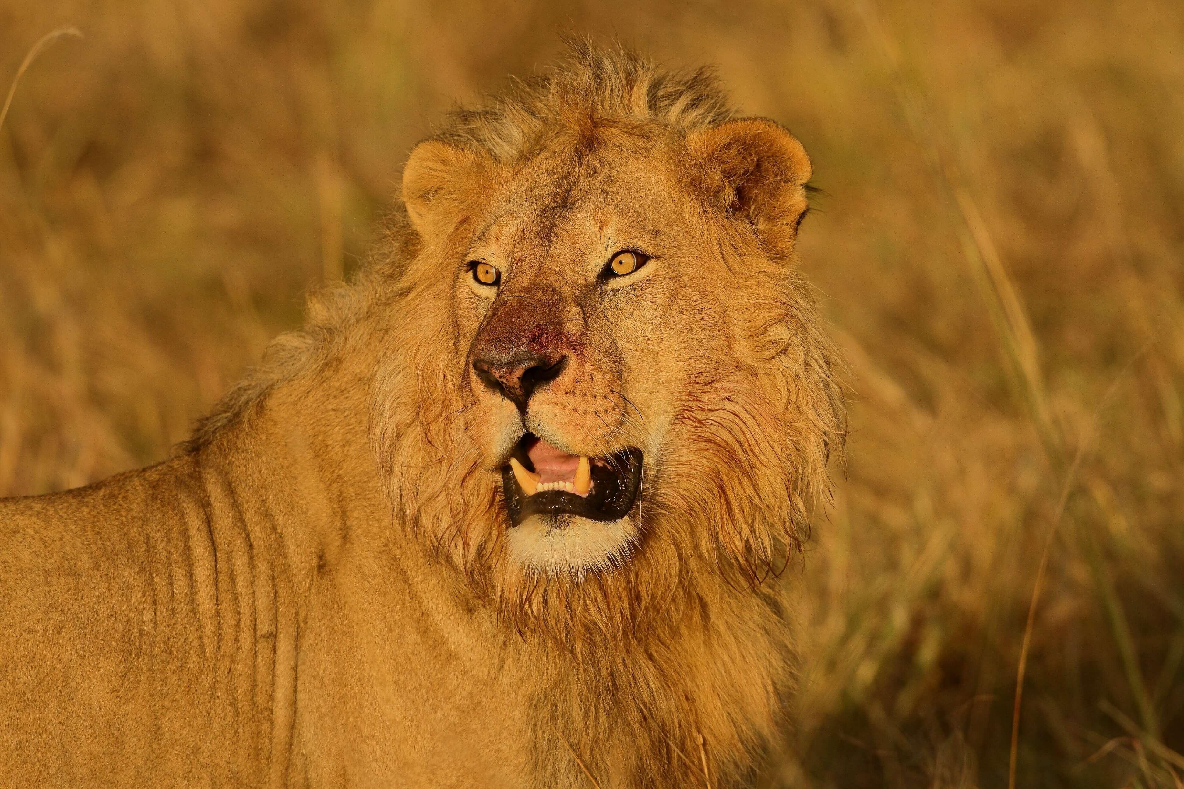 Tanzania Big Five Safari~ 6 Days