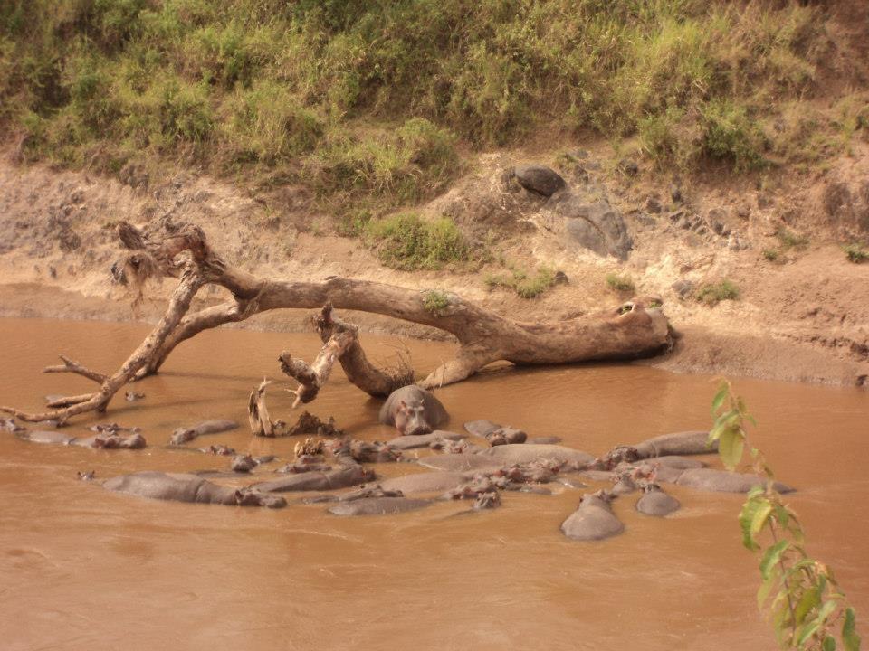 7 Days Masai Mara, Lake Nakuru, Lake Naivasha, Amboseli Camping Safari