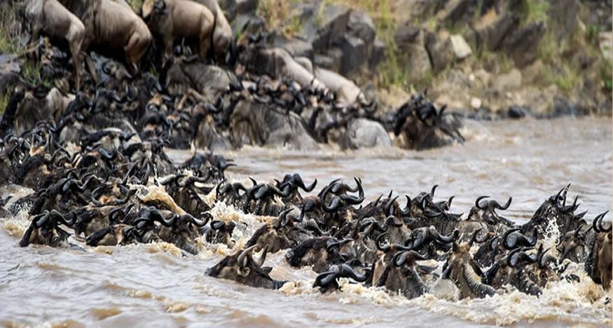 3 Days Maasai Mara National Reserve Safari Tour from Kisumu