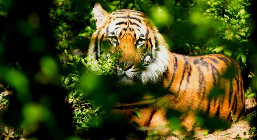 India Tiger Photography Tour