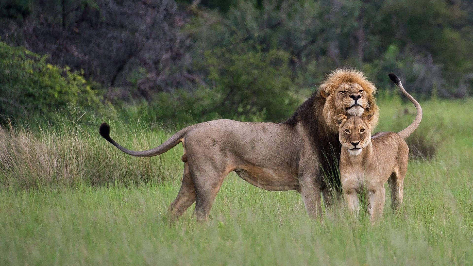 3-Day Murchison Falls National Park Experience - Mid-range safari
