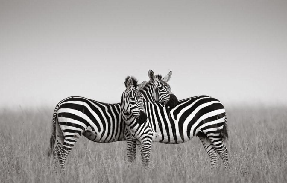 Private Couples Luxury  Safari~7 Days