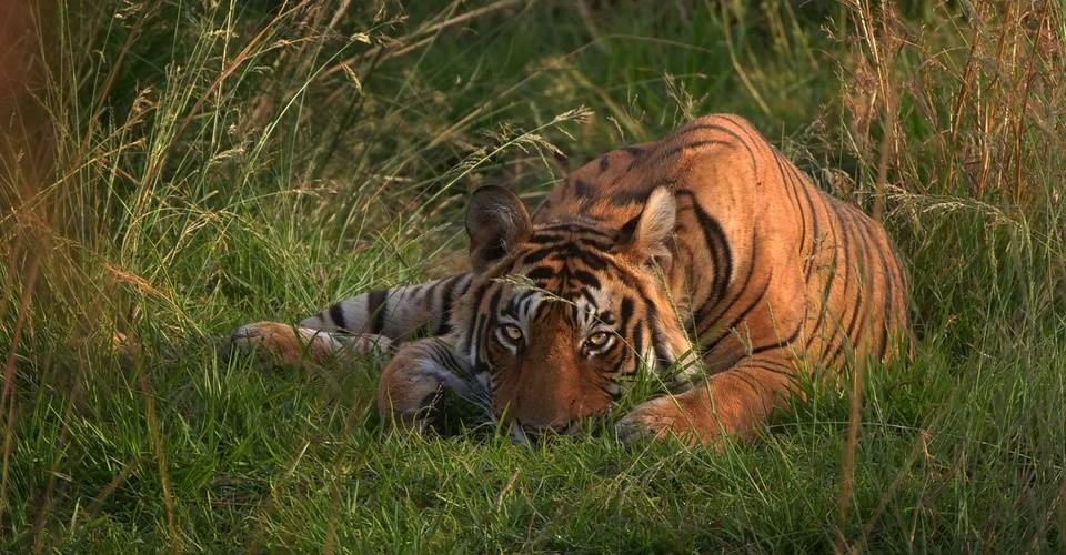 India Highlights and Tiger Safari Tour