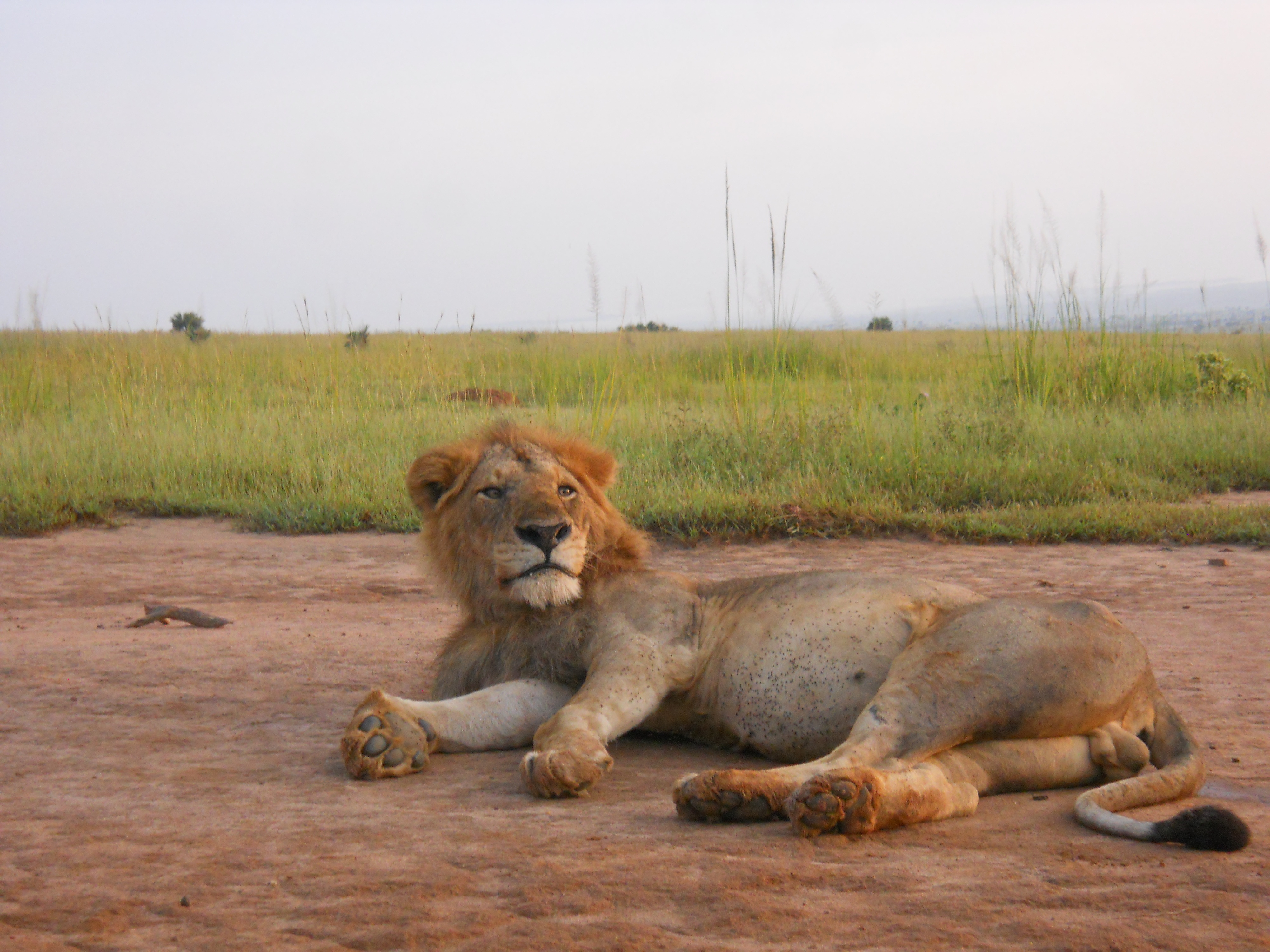 Family in the Wild Safari