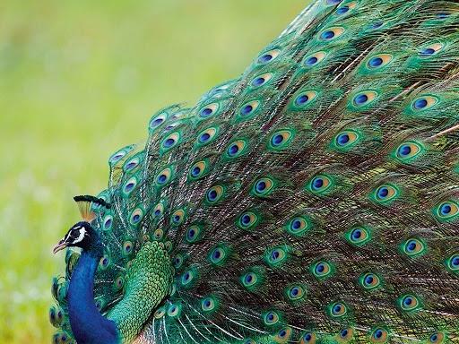 WILDLIFE PHOTOGRAPHY TOUR TO INDIA