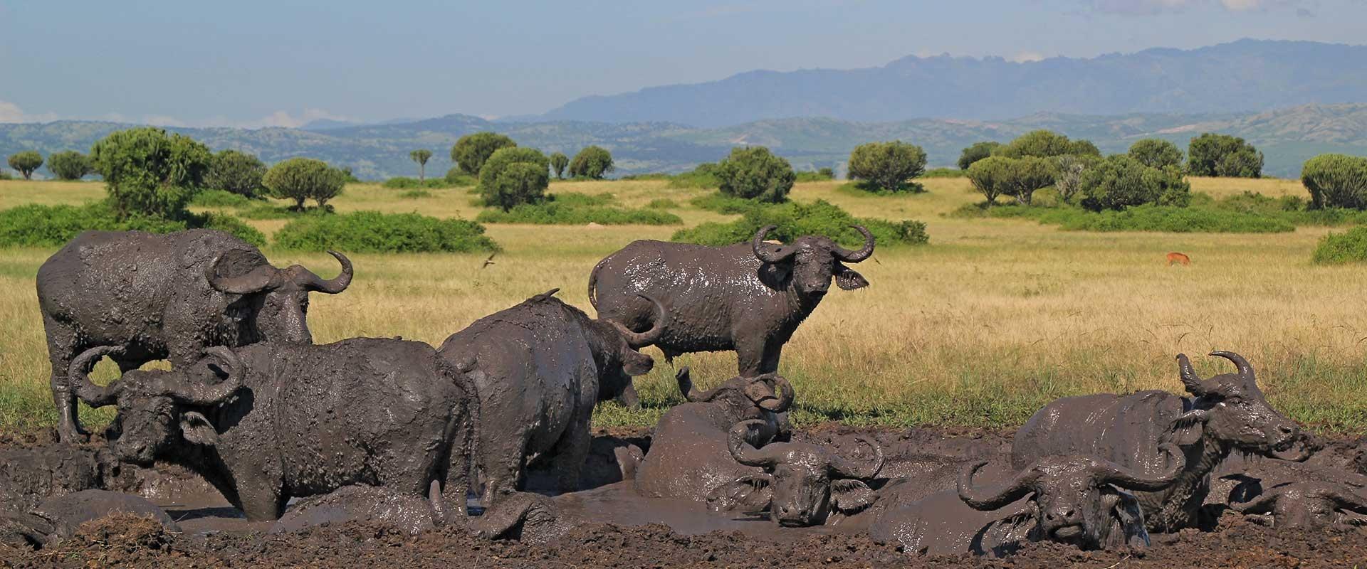 11 Days Uganda And Rwanda Private Safari Tour