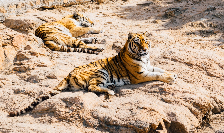 India Wildlife Photography Tour