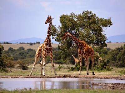 Masai Mara Amboseli 6 Days Safari