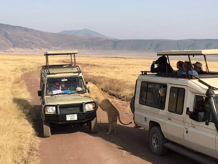 5 Day Serena Luxury Tanzania Safari