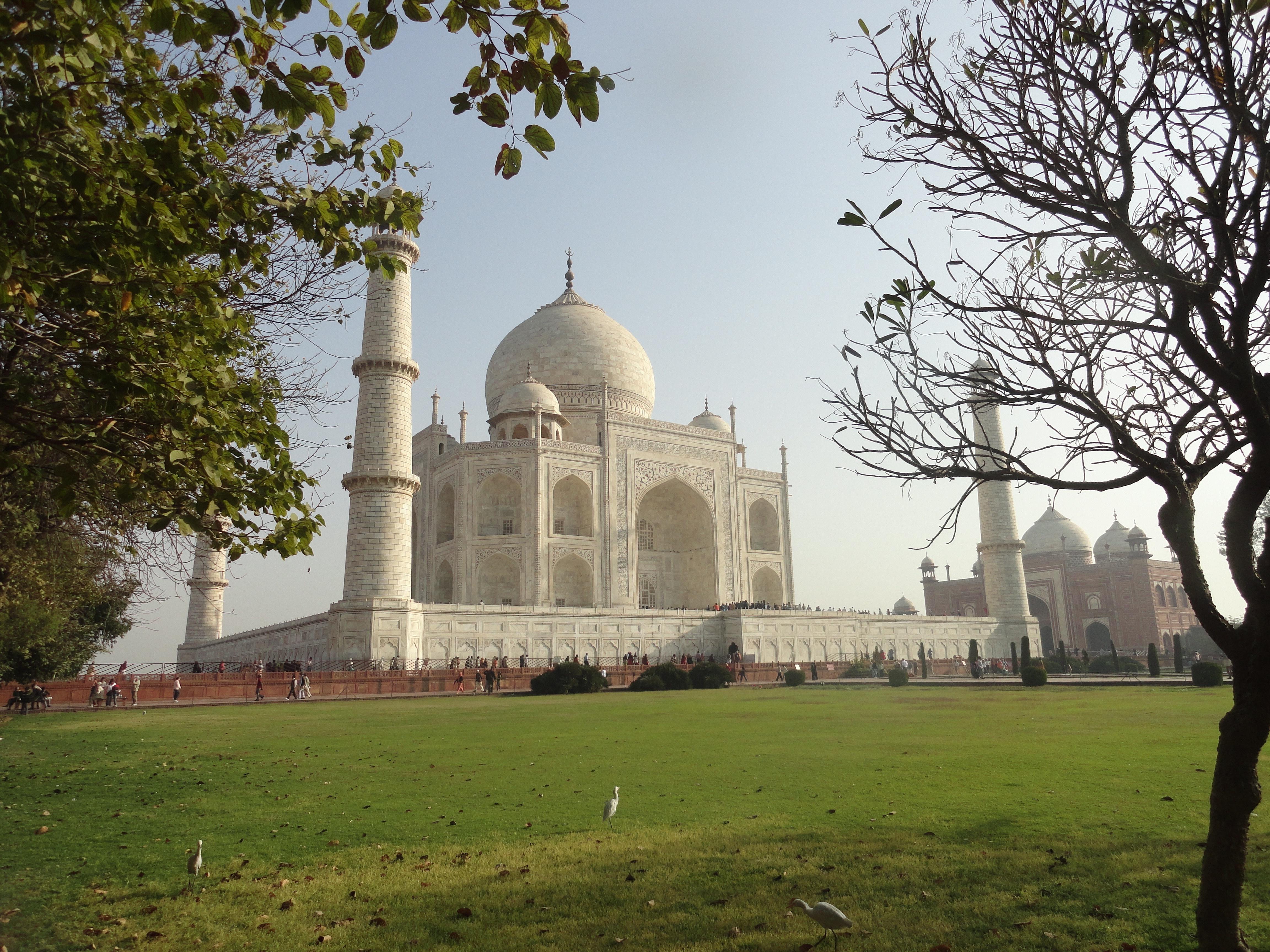 India Tour with Tiger Safari