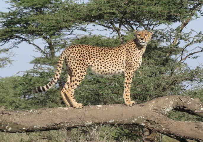 8 Days - The Highlights of Tanzania Safari