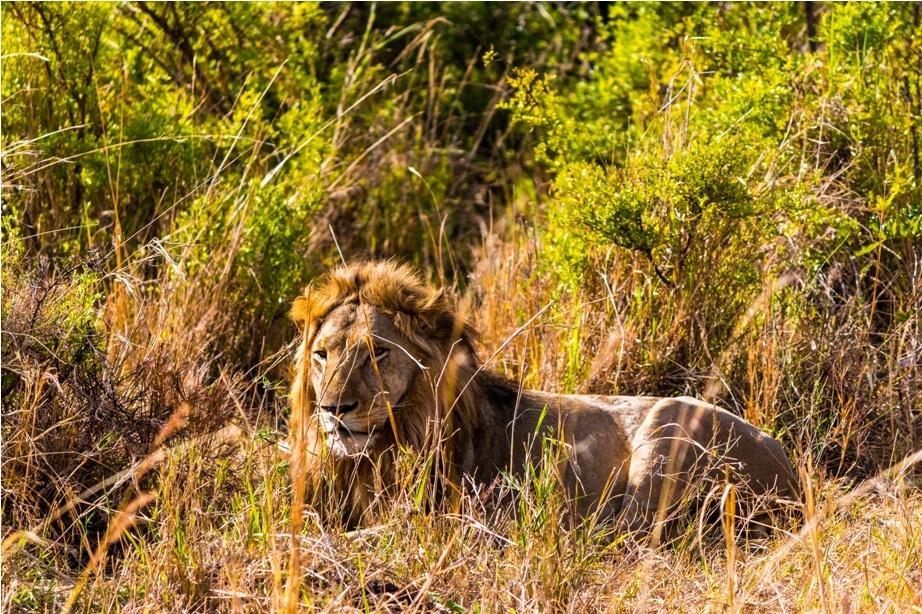 Big Kidepo Safari