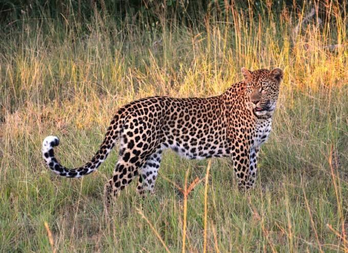 Lake Manyara, Serengeti and Ngorongoro Crater 4 Days 3 Night