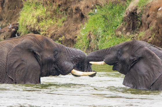 Whispers in the Wild Safari