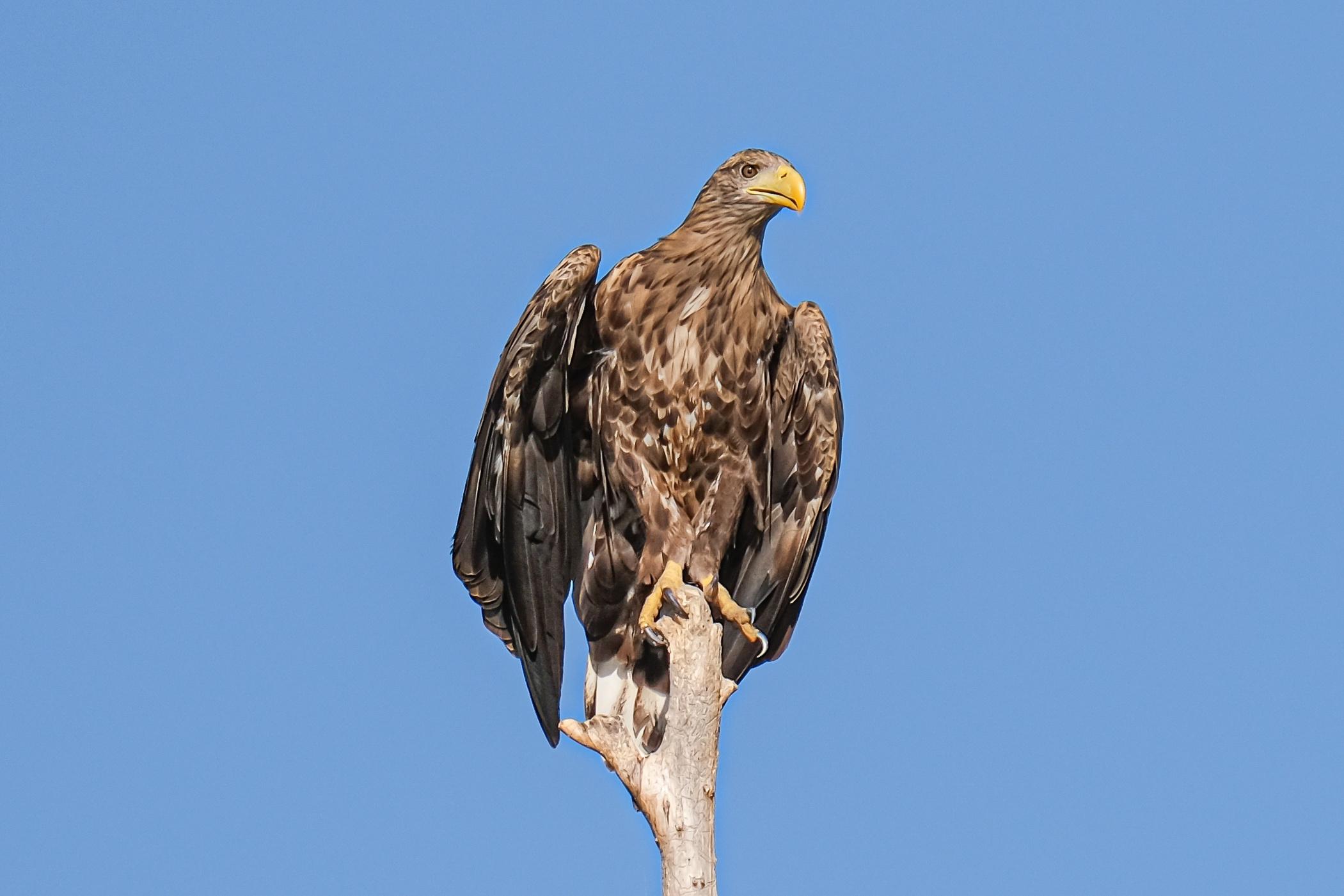 Bird Watching in Romania, Danube Delta Experience