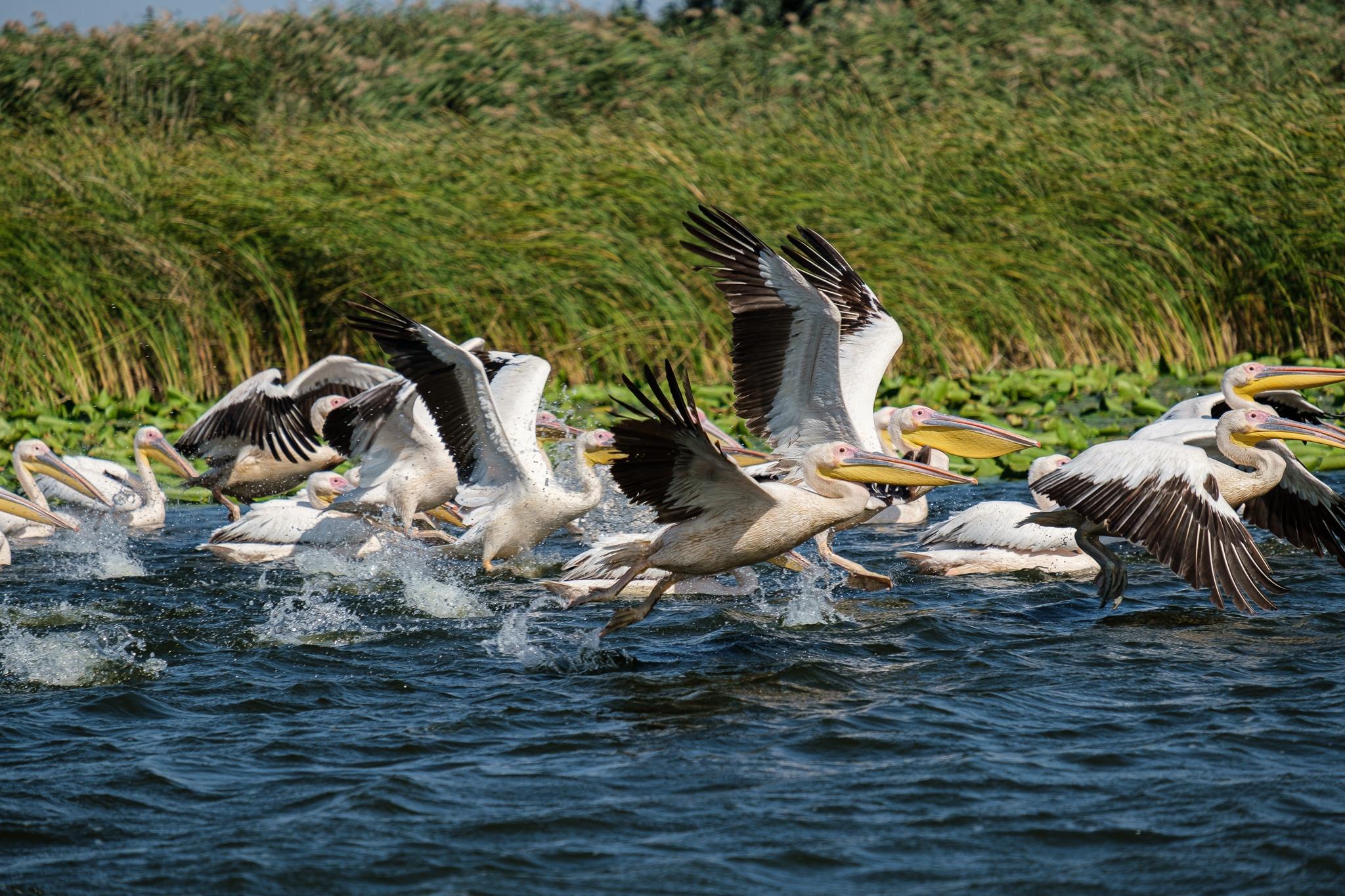 Meet the Danube Delta – Bird watching tour