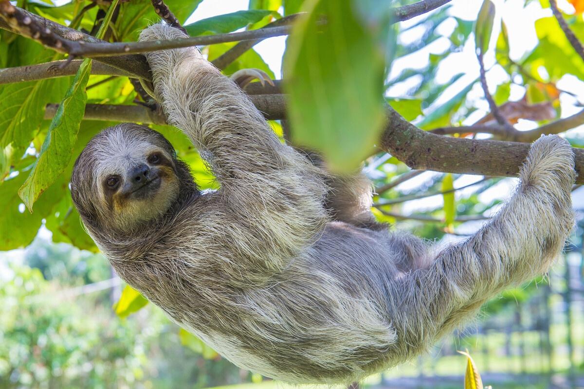 Family Costa Rica Rainforest and Wildlife Adventure