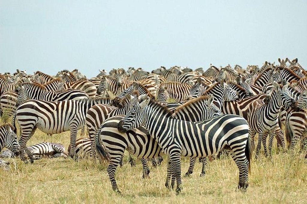 8 Day Tanzania Affordable Big Five Safari