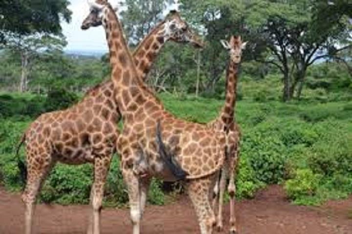 2 days Lake Nakuru Safari from Kisumu