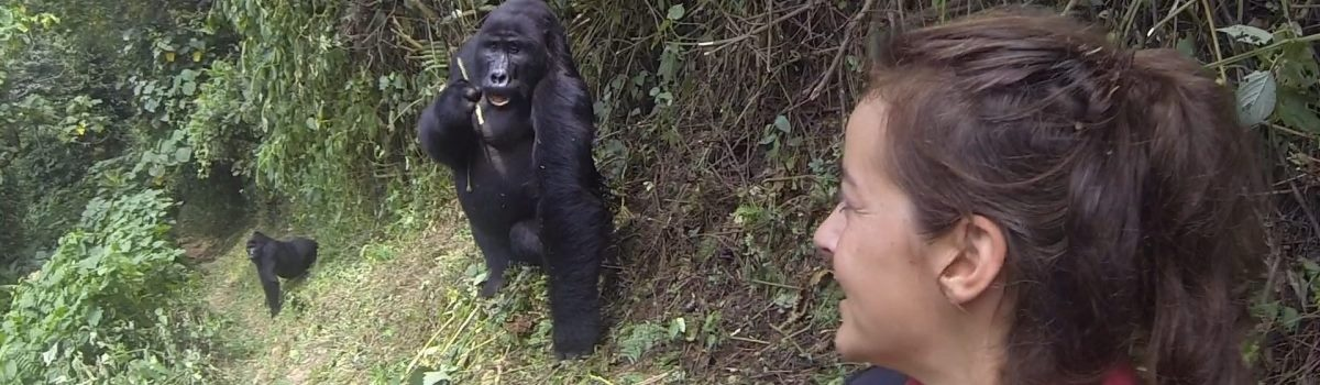 Taste of Uganda Gorilla Safari