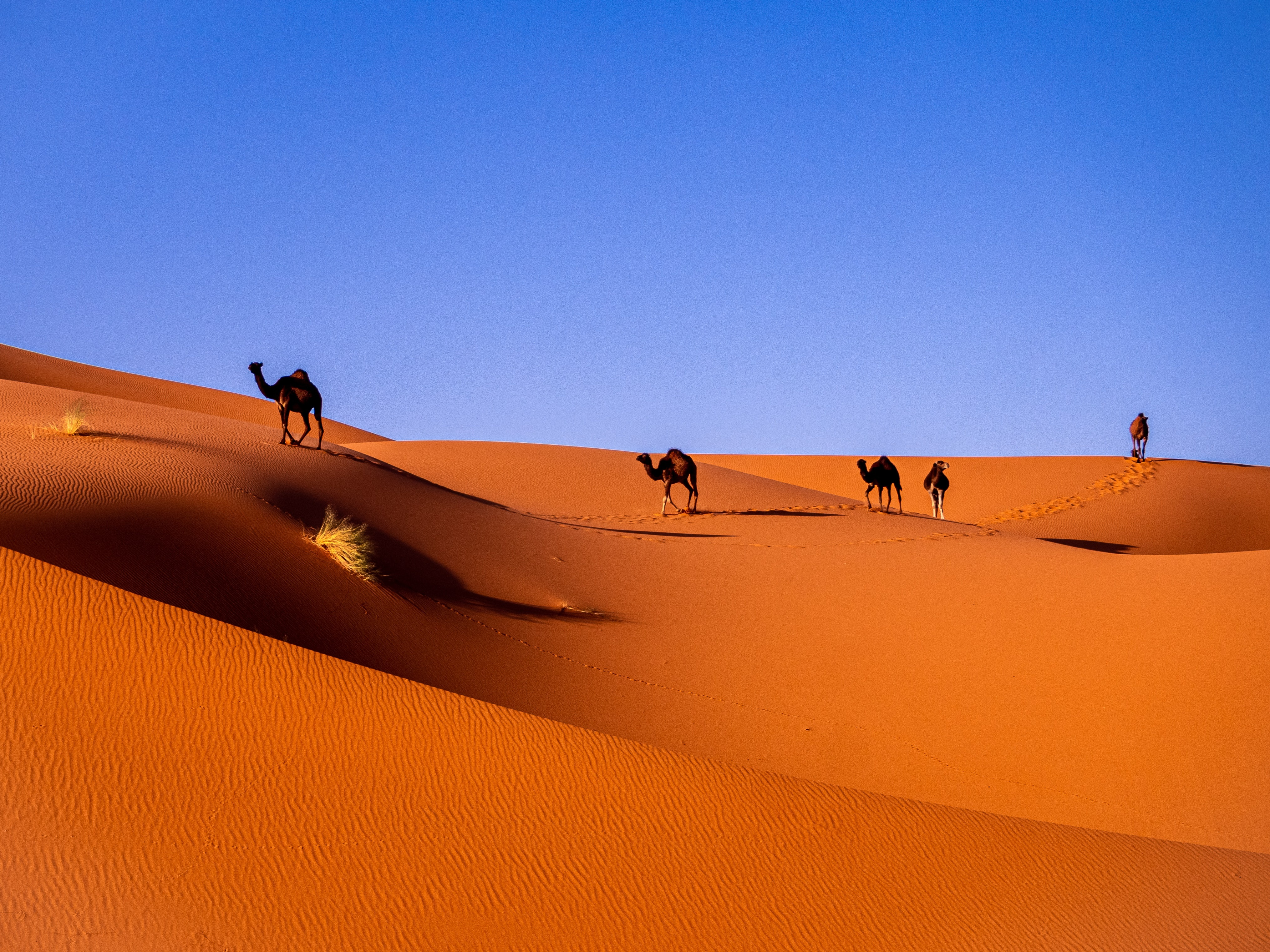 Marrakech to Merzouga - Back to Marrakech