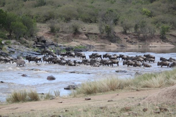 The Mara Serengeti Safari