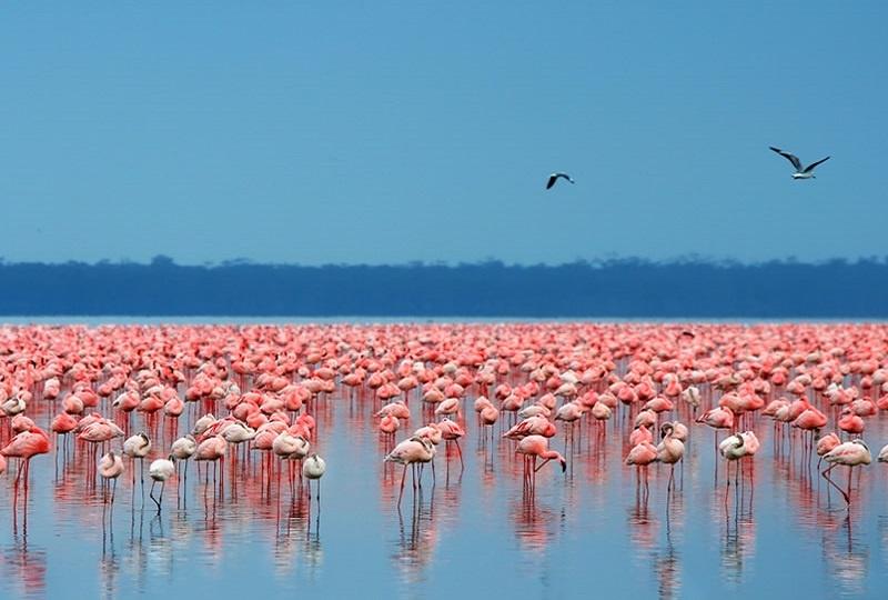 4 Days Masai Mara & Lake Nakuru Budget Tour from Kisumu