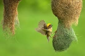 Bird Watching Tour