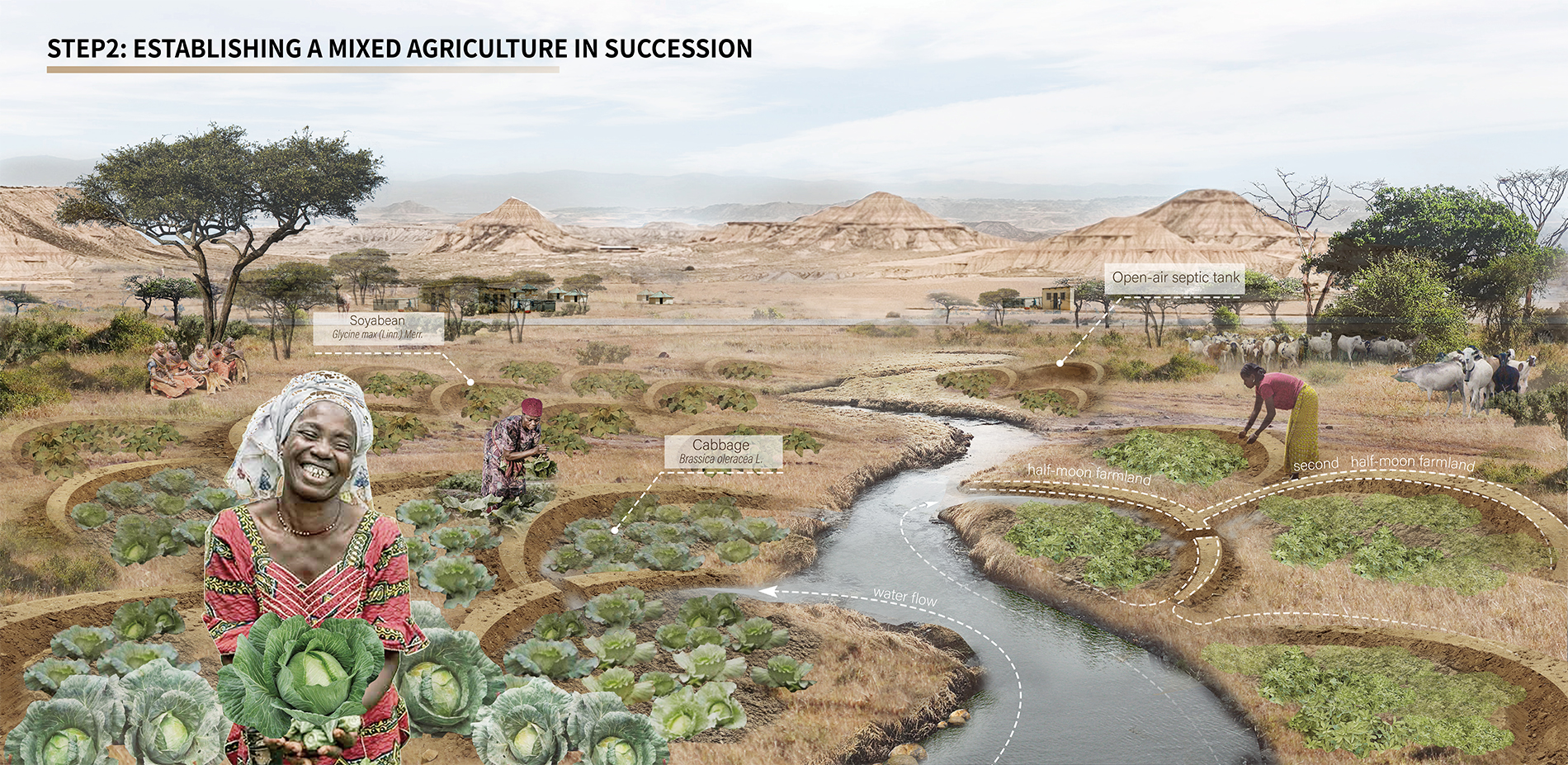 STEP2:ESTABLISHING A MIXED AGRICULTURE IN SUCCESSION