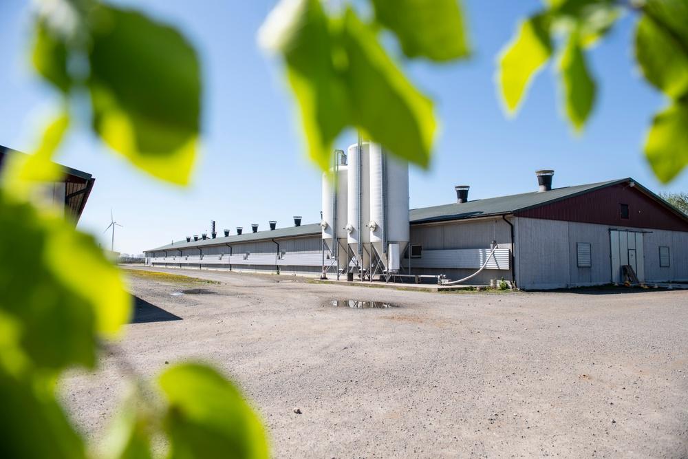 I kycklinguppfödningen i Sölvesborg har Atria installerat pelletspannor som en av åtgärderna för att nå målet att minska koldioxidutsläppen med 90 procent till 2025.