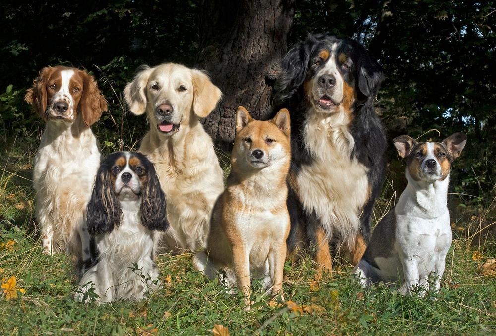 Sex hundraser sittande i gräset