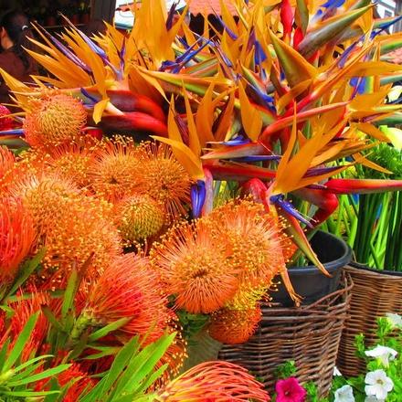 Tropical flowers in Funchal Market