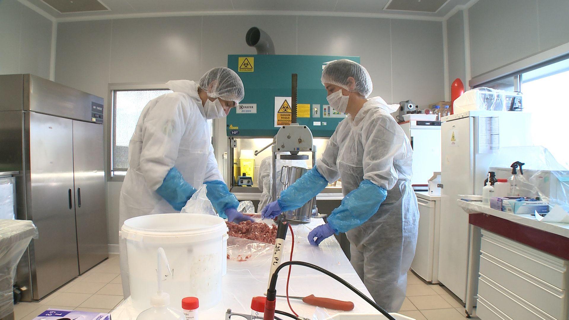 Représentation de la formation : Durée de Vie Microbiologie (DVM)