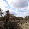 Qamos Fortress, Cemetery (Khaybar, Saudia Arabia, 2008)