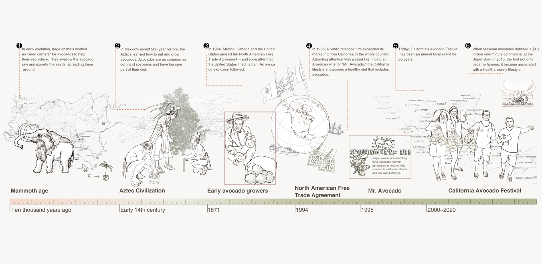 History of avocado planting