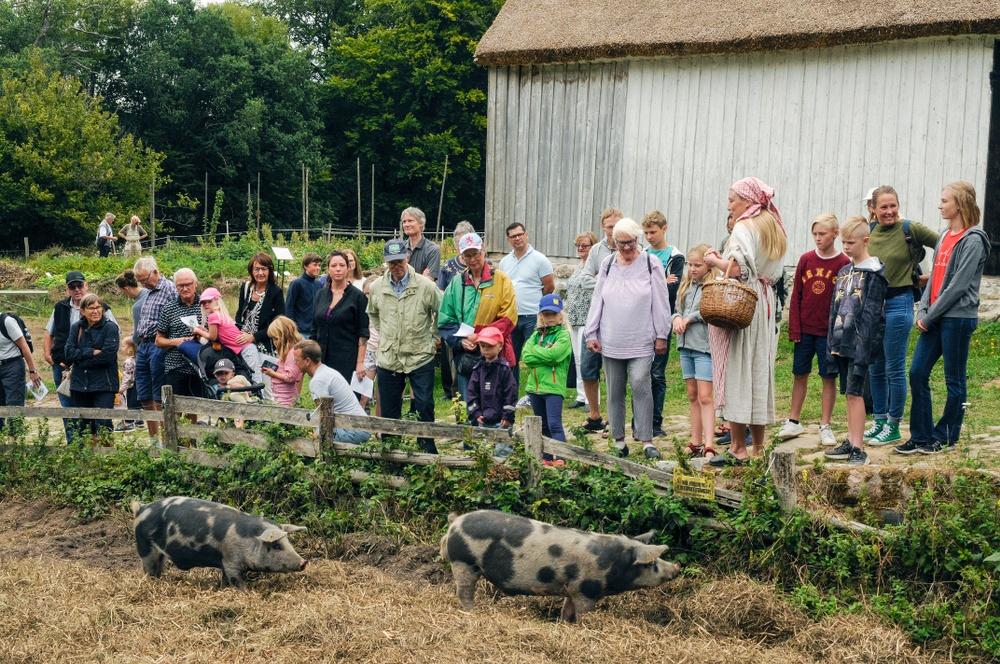 Gårdsbrukare Emma Johansson har en visning om lantrasdjuren på Kulturens Östarp. Här Linderödsgrisar. Foto: Viveca Ohlsson, Kulturen