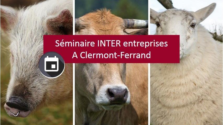 Représentation de la formation : Responsable et opérateur en protection animale en abattoir espèces bovine, ovine et porcine - Séminaire à Clermont-Ferrand