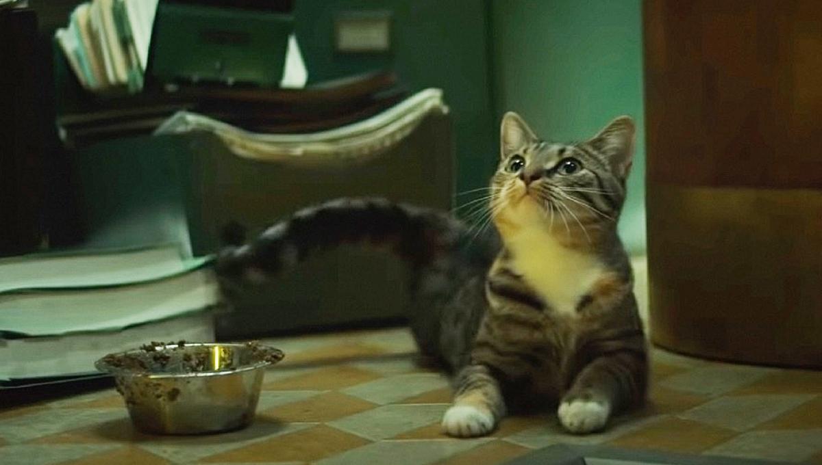 Cat or Flerken?