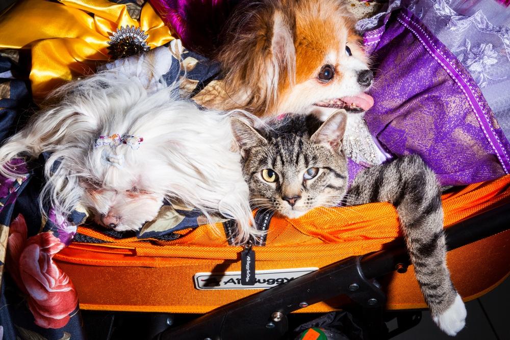 Hund och katt i resväska.