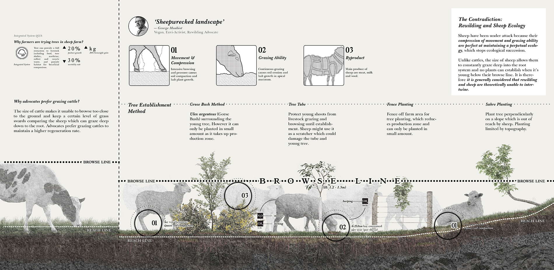 The Contradiction: Rewilding and Sheep Ecology