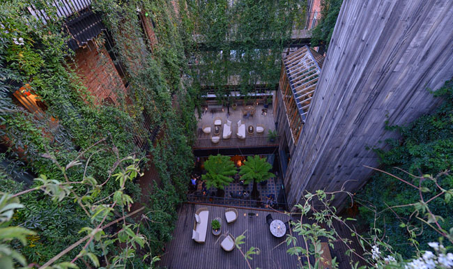 mandrake-terrace