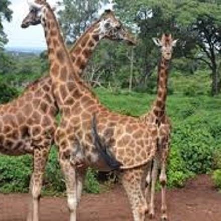 3 Days Lake Nakuru and Hell's Gate National Parks Safari from Kisumu