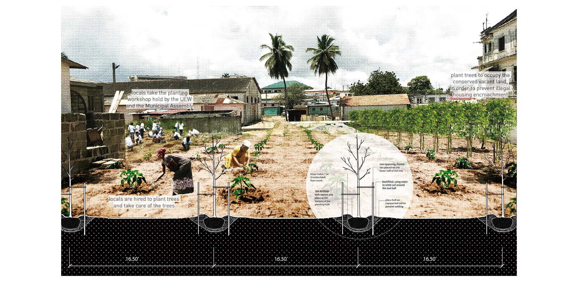 Phase 1 Pilot Project: The mango community